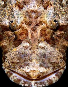 Crocodilefish portrait, Komodo, Indonesia by Michael Gallagher