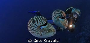 Chambered Nautilus by Girts Kravalis