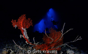 Sea fan on bottom of Blue Hole by Girts Kravalis