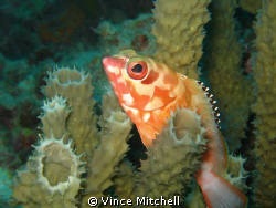 Taken while diving Kapalia in 2008 using a Canon A640, Ca... by Vince Mitchell