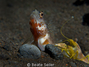 The gobi and the Blind shrimp , taken with Canon G10 and ... by Beate Seiler