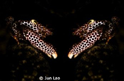 double vision by Jun Lao