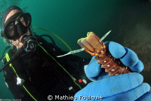 marine biologist floy-tagging a young lobster by Mathieu Foulquié