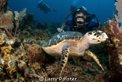 Lenny and a Hawksbill, D300, 10-17 lens by Larry Polster