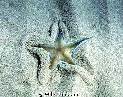 Starfish by Wiljo Jonsson