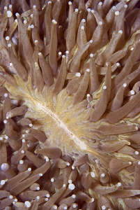 THE GAP