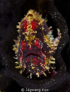 Frog Fish by Jagwang Koo