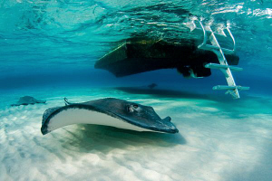 Stingray & dive boat.  10-18mm lens with red filter. by Paul Colley