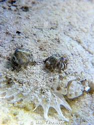 Flounder by Lütfi Tanrıöver
