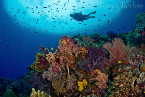 Nudi Rock, Raja Ampat by Tony Cherbas
