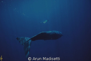 deep blue.