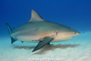 Large female Bullshark on a beach dive at Playa del Carmen by Henrik Gram Rasmussen