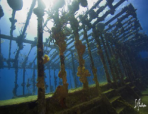 My favorite wreck off Nassau. The wreck is home to a lot ... by Steven Anderson