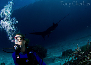 What Manta? Where? by Tony Cherbas