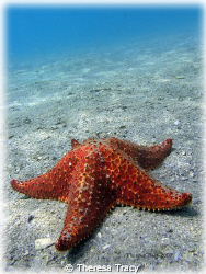 Something very simple.... lone starfish. by Theresa Tracy