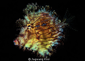 Leafy Filefish by Jagwang Koo