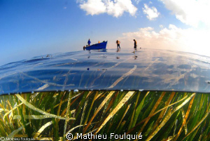 posidonia seagrass meadows_Libya by Mathieu Foulquié