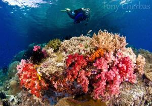 My favorite dive site: Nudi Rock, Raja Ampat by Tony Cherbas