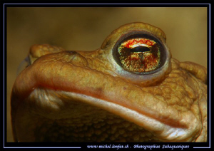 The look of a Toad... Que du bonheur... :O)... by Michel Lonfat