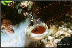 WOW!Jawfish. Nikon F100,60mm,f27,1/250,YS-120,RDP. by Allen Lee