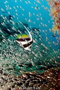 Pennant in a sea of glass fish by Stuart Ganz