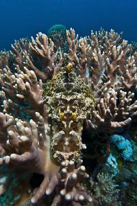 Can you see me? Crocodilefish captured with an 8mm fisheye by Reidar Opem