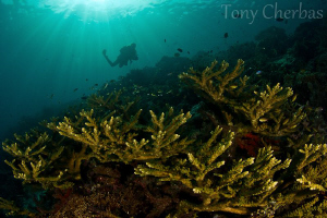 Finding gold in the ocean by Tony Cherbas