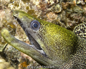 A yellow faced moray isn't giving me a very warm welcome by Rylan Stewart