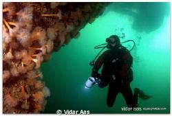 Cool cold water diver by Vidar Aas