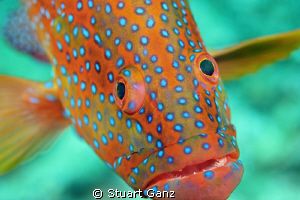 Here's looking at you ... by Stuart Ganz