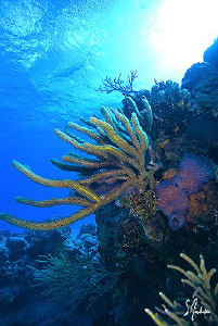 Diving the beautiful reefs and walls of Cozumel all provi... by Steven Anderson