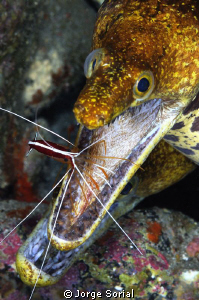 Mrs. Fangtooth Moray Eel going to the dentist to get a cl... by Jorge Sorial