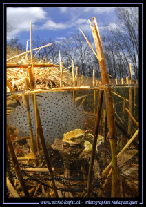 Toads having a good time in front of Frog Eggs... Que du ... by Michel Lonfat