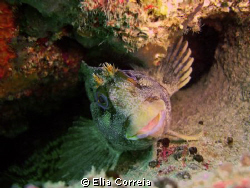 Cute goby! by Elia Correia
