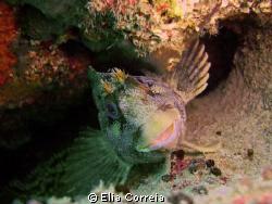 Cute goby! by Elia Correia