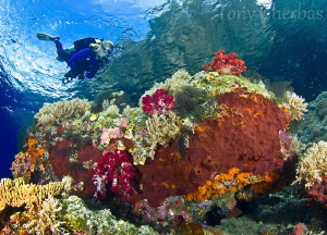 Exploring shallow coral formations on the safety stop by Tony Cherbas