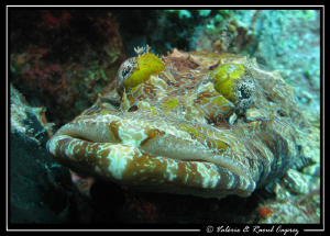 Give me a kiss !!! 