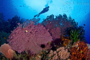 The Neon Forests of Raja Ampat by Tony Cherbas