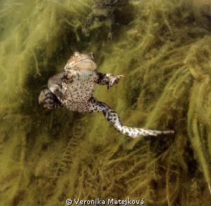 Crazy Frog :) by Veronika Matějková