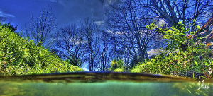 This is a HDR of the creek in back - Sunny day and playin... by Steven Anderson