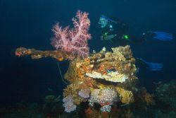 Coral encrusted bow gun on the Sankisan Maru, Truk Lagoon... by Kenneth Mostello