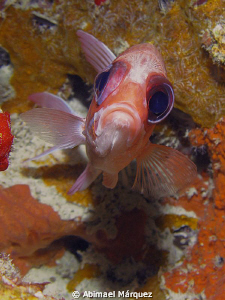 Face to Face with a Squirrelfish, Fajardo, P>R. by Abimael Márquez