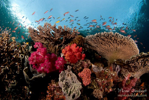 the perfect reef by Mona Dienhart