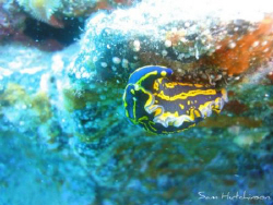 Snapped while diving in lanzarote. Canary Islands. Photog... by Sam Hutchinson