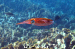 I asked the divemaster to find me a squid.  Then, a squid... by Danielle Stark