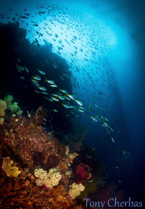 """This photo was taken at a dive site called """"Grouper Net"""".... by Tony Cherbas"""