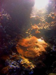 A ray of sun shines down a hole in the coral reef top, il... by Stein A. Mollerhaug
