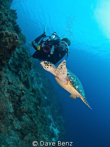 Amazing dive with my underwatermodel Mel and a curious tu... by Dave Benz
