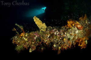 Cave Coral by Tony Cherbas