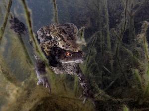 .. frogs by Veronika Matějková